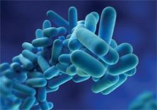 Second company served notice in Edinburgh legionella outbreak